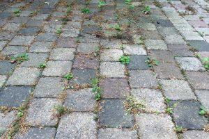 Gegen Unkraut zwischen Steinplatten muss es nicht immer die chemische Keule sein. Mit dem richtigen Gerät geht's schnell und deutlich umweltfreundlicher. (Bildrechte: FRAGDENSTEIN.DE/ Stein)